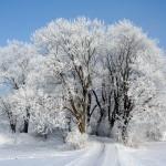 Getting a cold? It's Snow Joke!