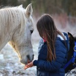 Horseback Riding: An Simple Vacation Planner for Equestrians