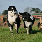 Six Reasons You Might Need an Electronic Dog Fence & Two Why a Dog Fence May Not Be The Right Move For You