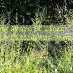 Being Aware Of Ticks While Hiking And Camping