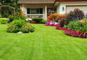 6 Ways to Show Your Yard Some Love This Spring